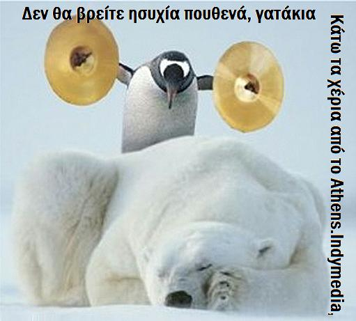 bear-funny-animal-humor-19936971-2048-2048